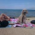 ...takto si užívajú leto niektoré psy z našej Chs